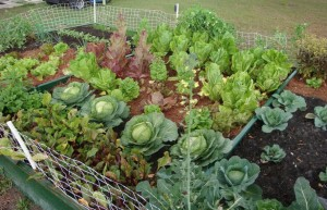 vegetable-garden-ideas2