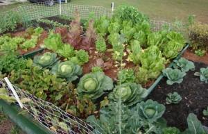 vegetable-garden-ideas2